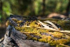 Moos auf dem Baum lizenzfreie stockbilder