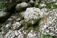 Moos auf dem Felsen stockfotos