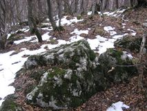 Moos auf dem Felsen Lizenzfreies Stockfoto
