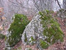 Moos auf dem Felsen Stockbilder