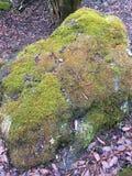 Moos auf dem Felsen Stockfoto