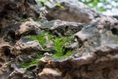 Moos auf dem Felsen Lizenzfreie Stockbilder