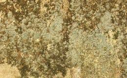 Moos auf dem Wandhintergrund Stockfoto