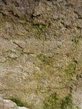 Moos auf der alten Wand Lizenzfreies Stockfoto