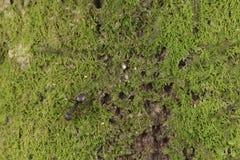 Moos auf der Naturbaumrinde stockfotos