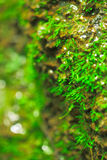 Moos auf der steinigen Klippe an der Quelle Lizenzfreie Stockbilder