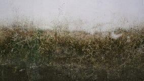 Moos auf der weißen alten Wand lizenzfreie stockfotos