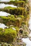 Moos auf einem alten Ziegelsteintreppenhaus auf Winter Lizenzfreie Stockbilder