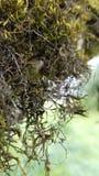 Moos auf einem Baum stockbilder