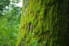 Moos auf einem Baum lizenzfreies stockbild