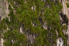 Moos auf einem Baum Lizenzfreies Stockfoto