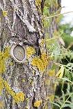 Moos auf einem Baum stockfotografie