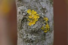Moos auf einem Baumstamm Stockbild
