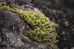 Moos auf einem Felsen Stockfotografie