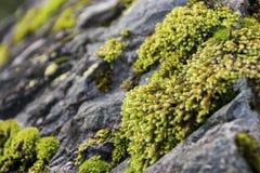 Moos auf einem Felsen Stockfotos