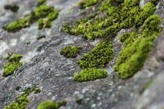 Moos auf einem Felsen Stockfoto