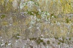 Moos auf einer alten Backsteinmauer Stockbild