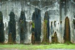 Moos auf einer alten Wand Stockfotografie
