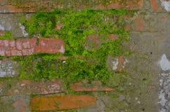 Moos auf einer Backsteinmauer Stockfotografie