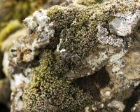 Moos auf Felsen stockbild