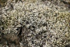 Moos auf Felsen stockfotografie