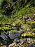 Moos auf Felsen am Fox-Gletscher, Neuseeland Stockfoto