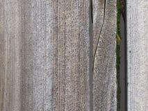 Moos auf Holz stockfotografie