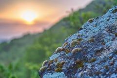 Moos auf Steinen Lizenzfreies Stockbild