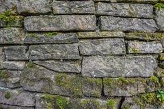 Moos auf Steinwandbeschaffenheit Stockfotografie