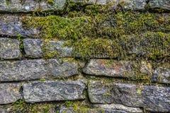 Moos auf Steinwandbeschaffenheit Lizenzfreie Stockfotos