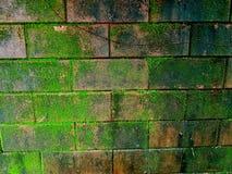 Moos auf Ziegelstein fence2 Stockbild