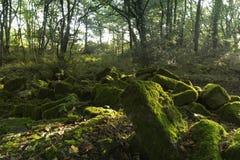 Moos bedeckte Felsen in einem Wald stockfotos
