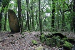 Moos bedeckte Megalithe im Wald Stockbild