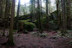 Moos bedeckte Wald Lizenzfreies Stockfoto