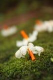Moos-Blume Stockfoto
