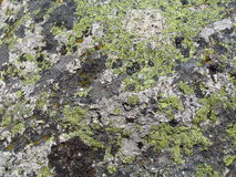 Moos, das auf Felsen wächst lizenzfreies stockbild