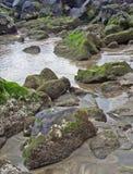 Moos, das auf vulkanischen Felsen und Sand im seichten Wasser wächst Lizenzfreie Stockfotos