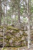 Moos, das in den Sprüngen im felsigen Abhang im Acadia-Nationalpark wächst Lizenzfreie Stockbilder