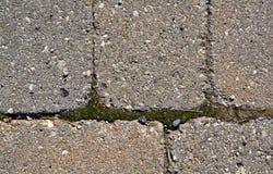 Moos, das durch Steine, Nahaufnahme wächst Lizenzfreies Stockbild