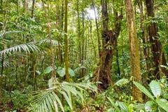 Moos deckte Bäume im Regen-Wald ab stockfotografie