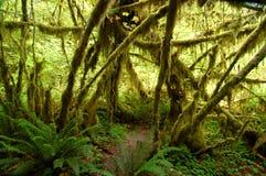 Moos deckte Bäume no.2 ab Stockfotos