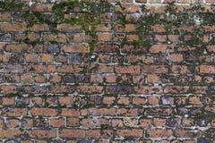 Moos deckte Backsteinmauer ab stockfoto