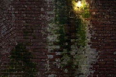 Moos deckte Backsteinmauer ab stockfotografie