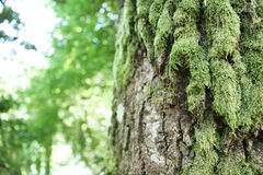Moos deckte Baum ab Stockfotografie