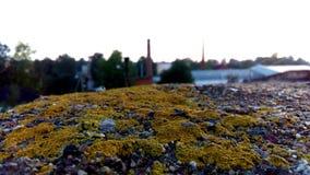 Moos in einer Landschaft Stockfotografie
