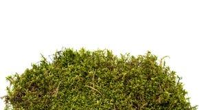 Moos getrennt auf Weiß Stockfoto