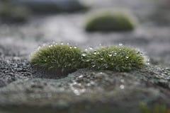 Moos-gewachsener Stein stockfotografie
