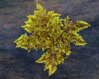 Moos growing on fallen tree Stock Photography