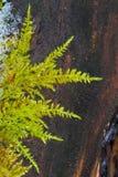 Moos growing on fallen tree Royalty Free Stock Image
