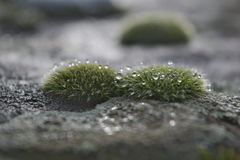 Moos-grown stone Stock Photography
